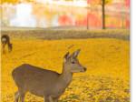 大仏池と鹿 黄葉
