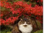 鎌倉 円覚寺の猫