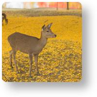 大仏池と鹿_アイコン