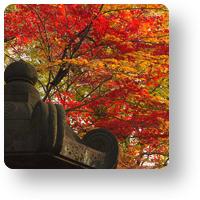 上野東照宮の紅葉_icon
