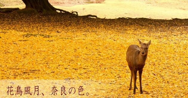 花鳥風月_奈良の色_タイトル画像_