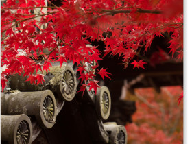 京都 永観堂の紅葉