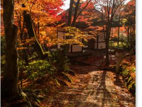 京都 永観堂の紅葉_仁王門
