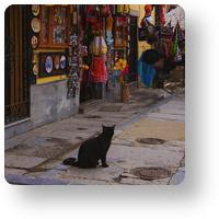 アンダルシアの猫_icon