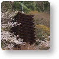談山神社の桜吹雪_icon