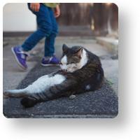 倉敷の猫_icon
