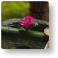 円覚寺の椿_icon
