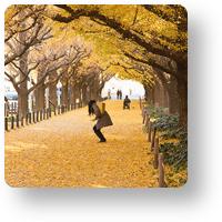 神宮外苑の銀杏並木_icon1