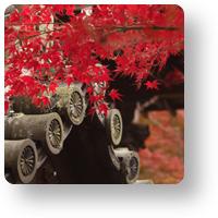 京都 永観堂の紅葉_アイコン