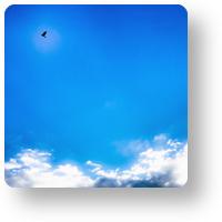 青空と鳥_icon