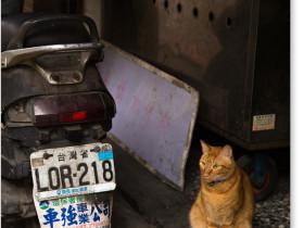 龍山寺の猫
