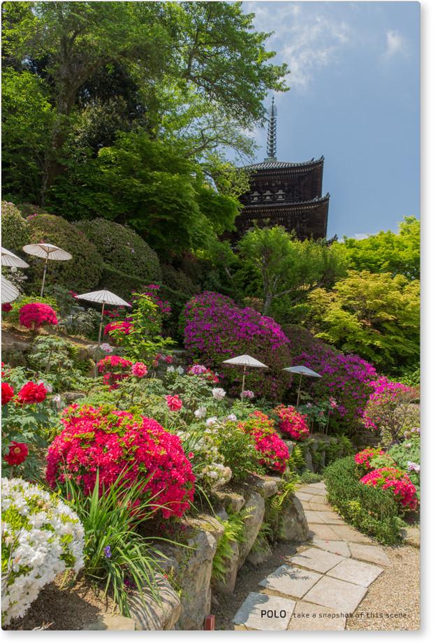 當麻寺 護念院の牡丹とツツジ