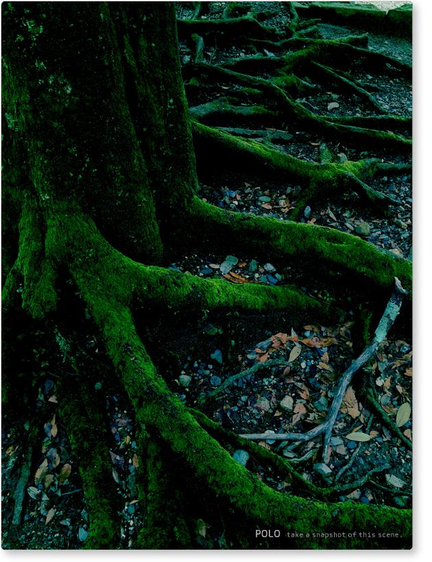 奈良公園_木と苔