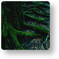奈良公園_木と苔_icon