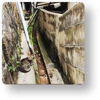 尾道の猫_icon