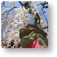 氷室神社の桜と狛犬_icon