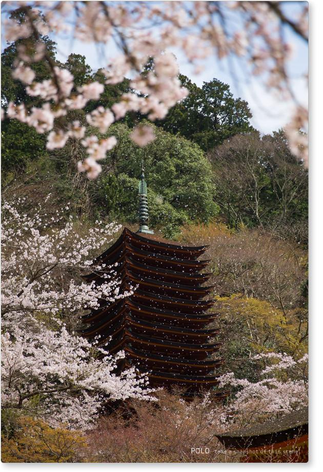 談山神社の桜吹雪