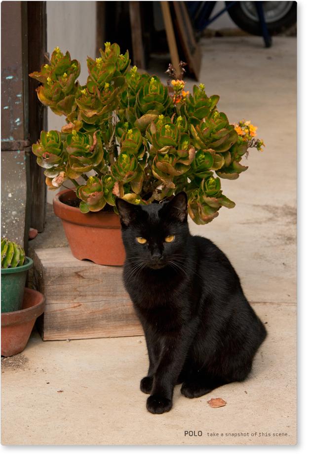 長岳寺の猫