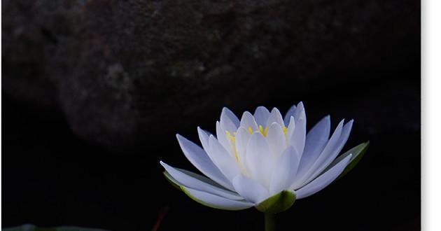喜光寺の水連