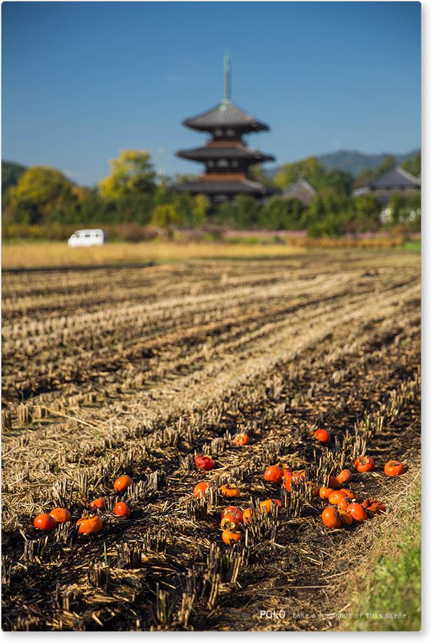 法起寺と柿