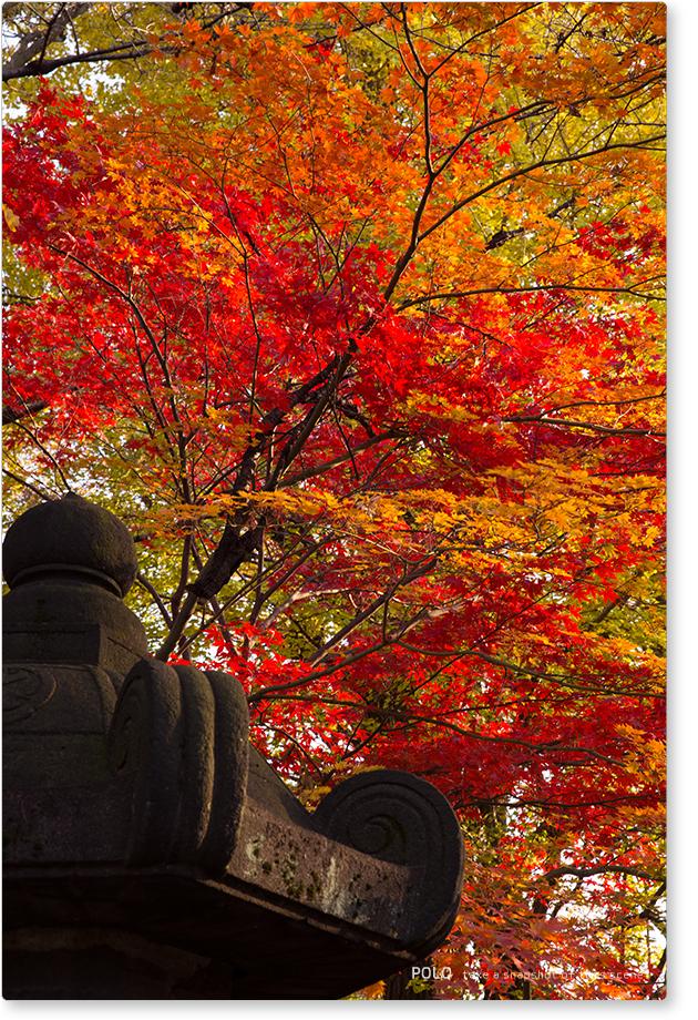 上野東照宮の紅葉