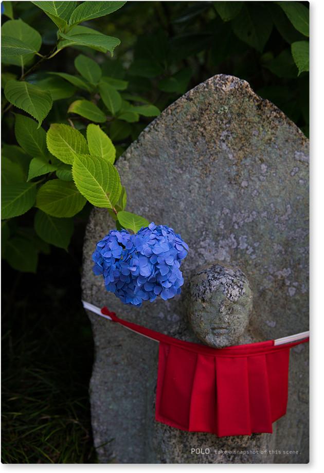 矢田寺の紫陽花_2