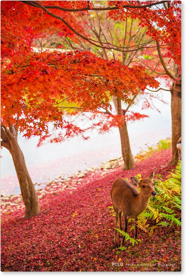 大仏池と鹿
