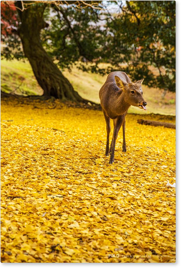 大仏池の鹿2