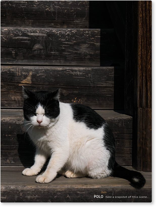 法隆寺の猫