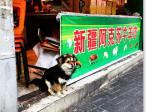 上海のわんこ