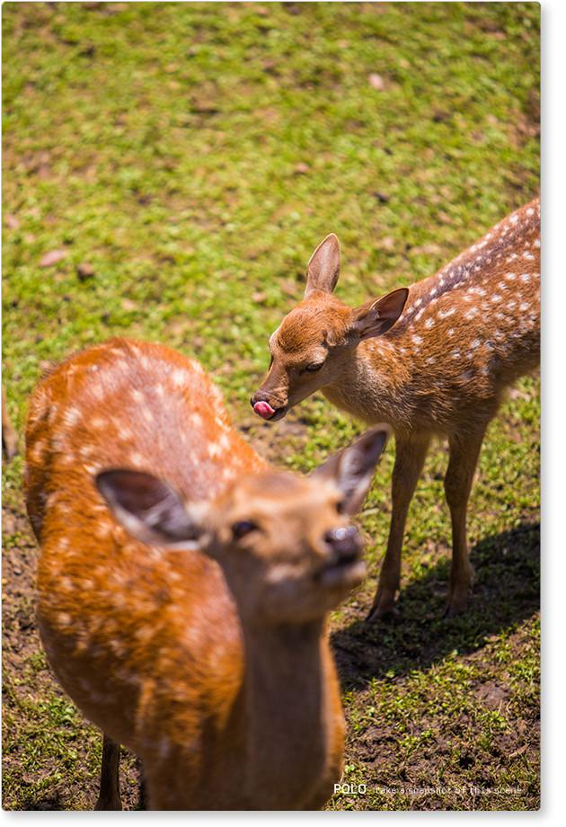 鹿の赤ちゃん