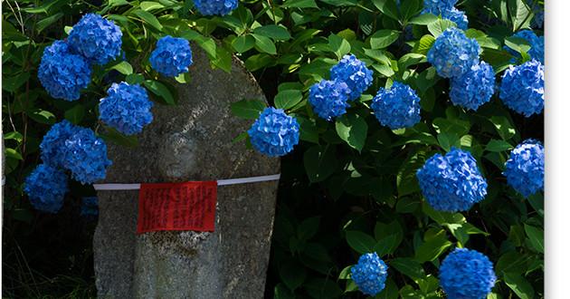 矢田寺のお地蔵さん