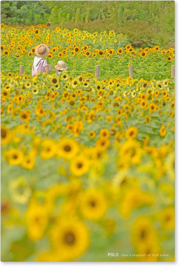 ひまわり畑と親娘