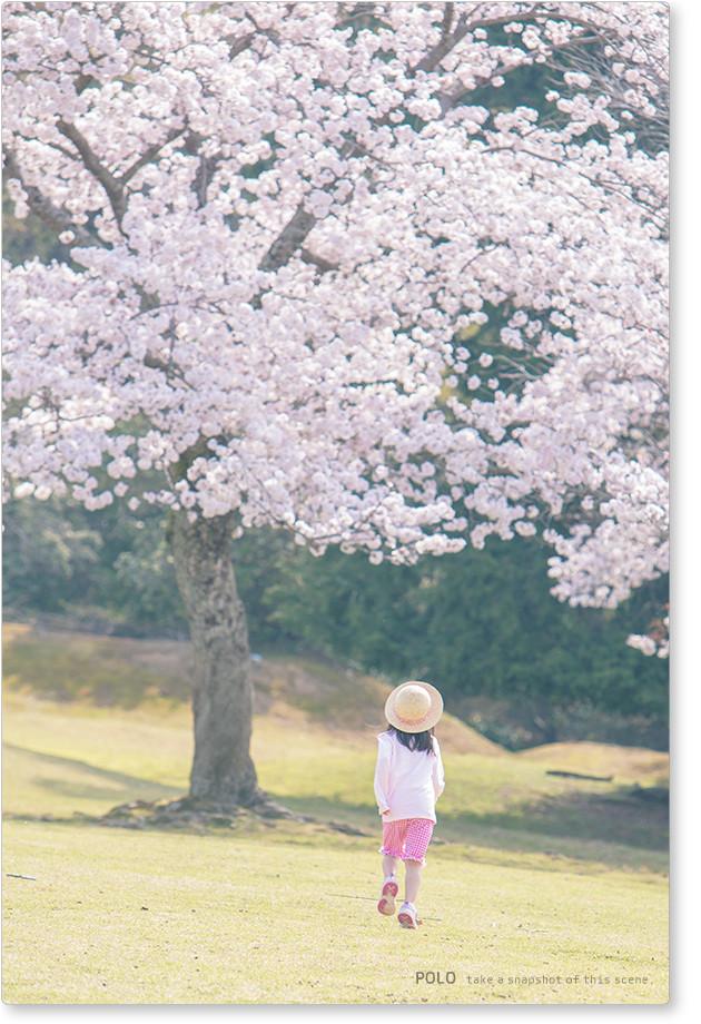 飛火のの桜