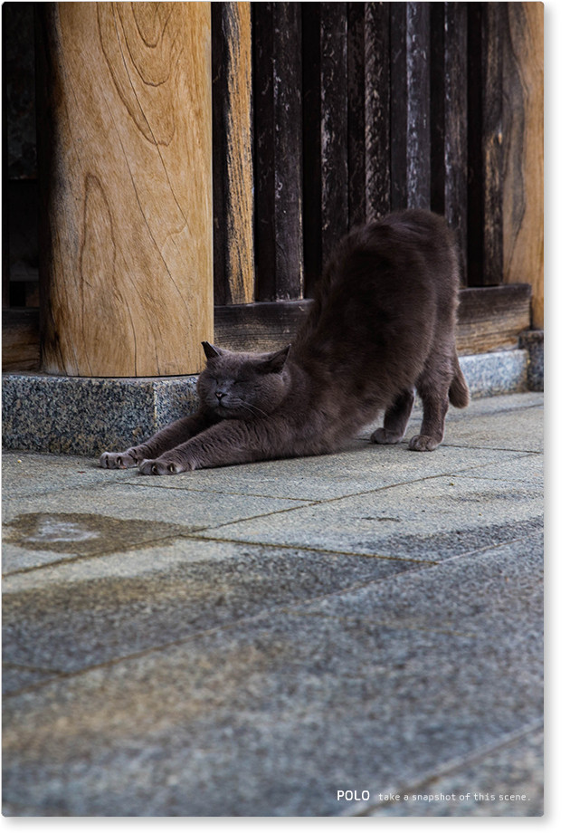 久米寺の黒猫