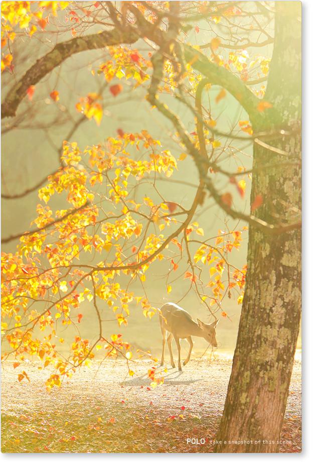 朝の奈良公園2
