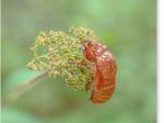 ランタナと蝉の抜け殻